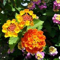 Просто цветочки :: Денис Кораблёв