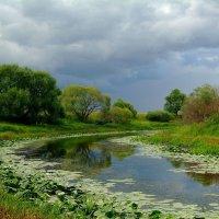 Перед дождём.. :: Юрий Анипов