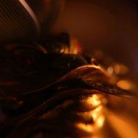 Лягушонок с монеткой :: Екатерина Василькова