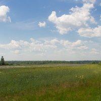 Васильковое поле... :: Caba Nova