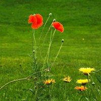 Во саду.... :: Александр Тулупов
