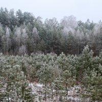 Оттенки зелёного. :: Андрий Майковский
