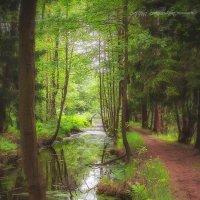 Волшебный лес :: Svetlana Sukhorukova