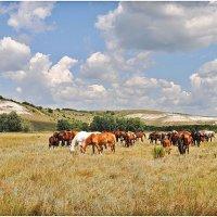 На лугу пасутся кони. :: Владимир Горбунов
