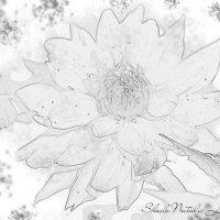 Цветок в карандаше :: Наталья (ShadeNataly) Мельник