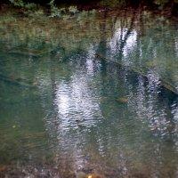 На дне старого озера... :: Наталья Тимофеева