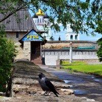 Псковская ворона :: Наталья Левина