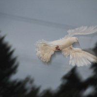 И полетел он, полетел.... :: Tatiana Markova