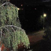 Ночь , улица , фонарь. :: Мила Бовкун