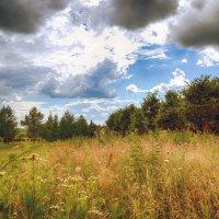 Лето.... :: Александр Селезнев