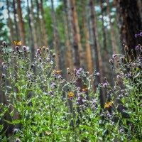 Бабочки красотки :: Вадим Куликов
