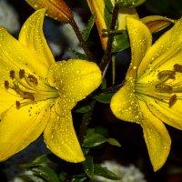Цветы и капли дождя :: Андрей Дворников
