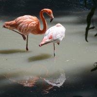 Розовая идилия :: Ростислав