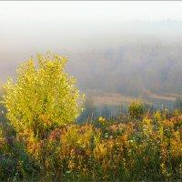 Про утренний свет... в тумане. :: Александр Никитинский