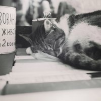 Копейка котьку бережёт! :: Сёто Deer