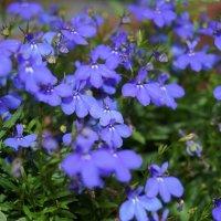 цветы :: Аркадий О(*_*)О