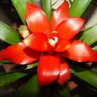 Цветочный хоровод-324. :: Руслан Грицунь