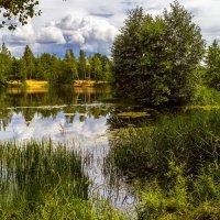 Лесное озеро :: Андрей Дворников