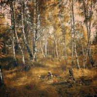 В березовом лесу,,, :: Виктория Власова