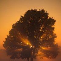 в тумане :: Александр Барановский