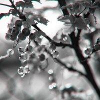 Июльские картинки :: Эльмира Суворова
