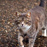 Кошечка :: Елизавета Митрофанова