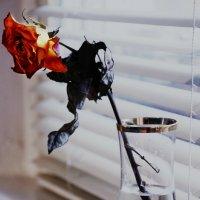 Каменная роза :: Елизавета Митрофанова