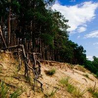 Какие корни у сосны! Они огромны и странны, Они неслыханно сильны, Как будто бы из киносказки! :: Жемчужникова Марина