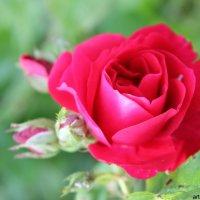 Цветочный хоровод-327. :: Руслан Грицунь