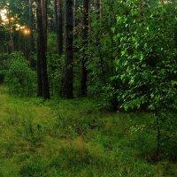 Прощается с ночными снами лес... :: Лесо-Вед (Баранов)