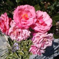 Розовые розы :: BoxerMak Mak