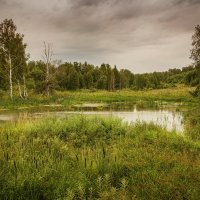 Таежная тишина :: Павел Сухоребриков