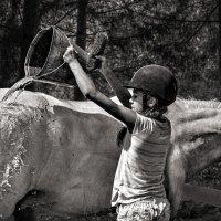 Купание белого коня :: Nn semonov_nn