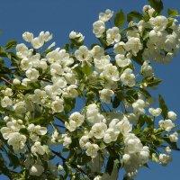 майское цветение :: Любовь