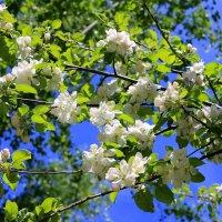 Когда яблони цветут.... :: Валентина ツ ღ✿ღ
