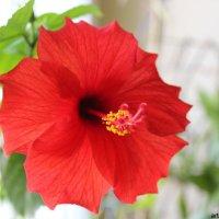 Цветочный хоровод-335. :: Руслан Грицунь