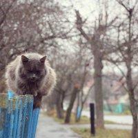 Хмурый осенний сосед :: Ирина Луганская