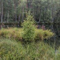 Подмосковный пейзаж. Фото 8. :: Вячеслав Касаткин