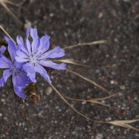 Городские цветы :: Дмитрий Лебедихин