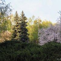 Весна :: Елена Palenavi