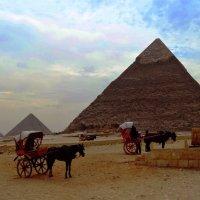 Cairo :: Екатерина Кудреватых
