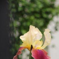 Цветочный хоровод-336. :: Руслан Грицунь
