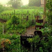 Огородов поливание :) :: Милла Корн