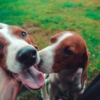 Dogs :: Anton Kudryavtsev
