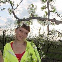 Цветущая яблоня в саду :: Елена Чеснокова