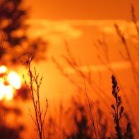 sunset :: Василиса Керн