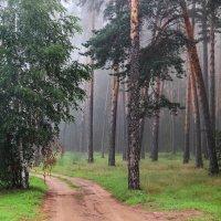 И память выросшей берёзкой... :: Лесо-Вед (Баранов)