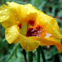 Цветок в дождливый день... :: Тамара (st.tamara)