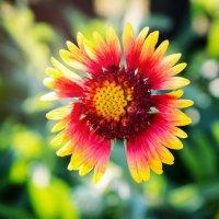 Лето... Тепло... Цветы... :: Светлана Шаповалова