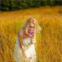 Полевые цветы... :: Александр Никитинский